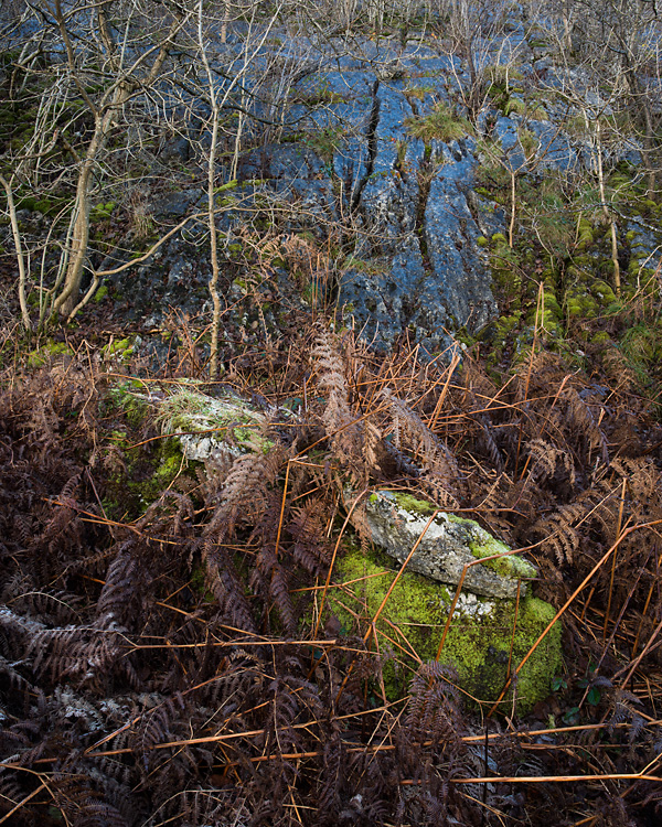Scrub, Hutton Roof Crags