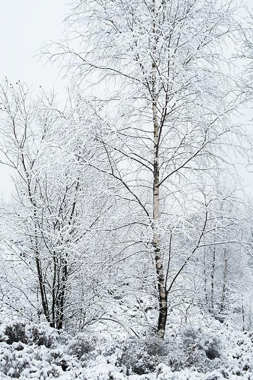 Snowy Woodland, Cox Green Quarry 08