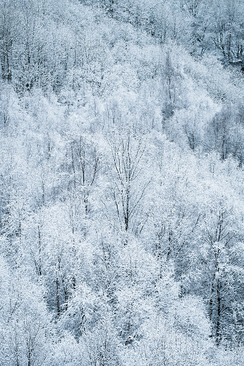 Snowy Woodland, Cox Green Quarry 02