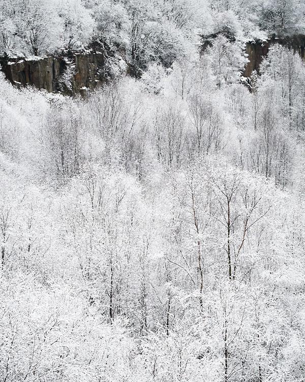 Snowy Woodland, Cox Green Quarry 07