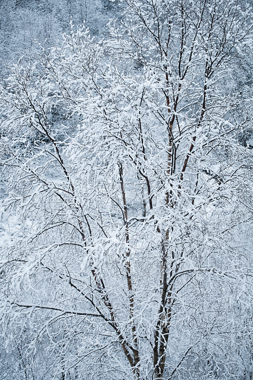 Snowy Woodland, Cox Green Quarry 01