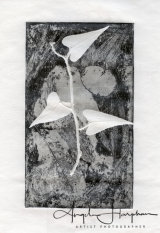Etching and Embossing Fragility