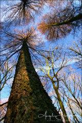Photograph Gillfield Woods Sheffield