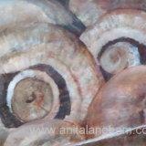 Chestnut Mushrooms Painting