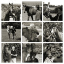 THE EPSOM RACEHORSE TRAINERS COLLECTION 2014