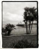 Eastbourne Pier & Palms