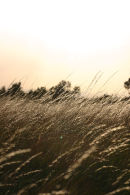 Sparkles in the Long Long Grass