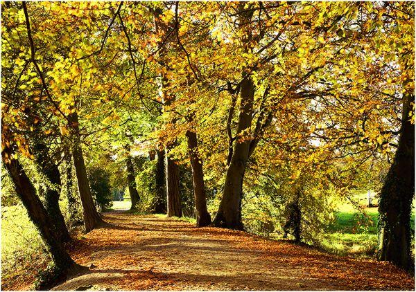 Autumn at Coate