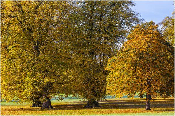 Autumn 43