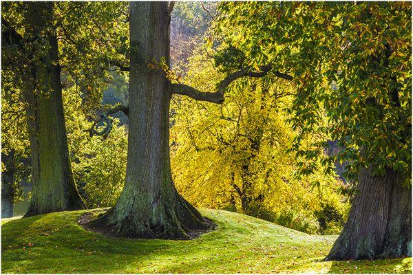 Autumn 45