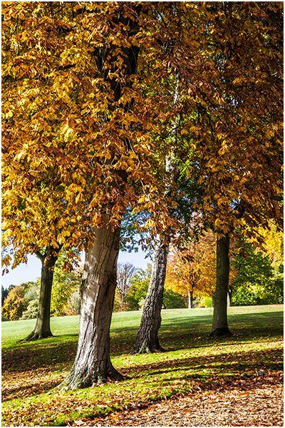 Autumn 55