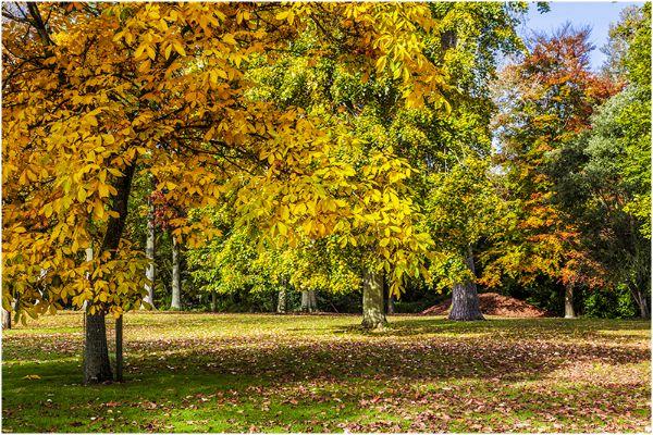 Autumn 63