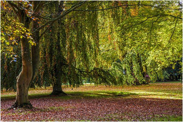 Autumn 67
