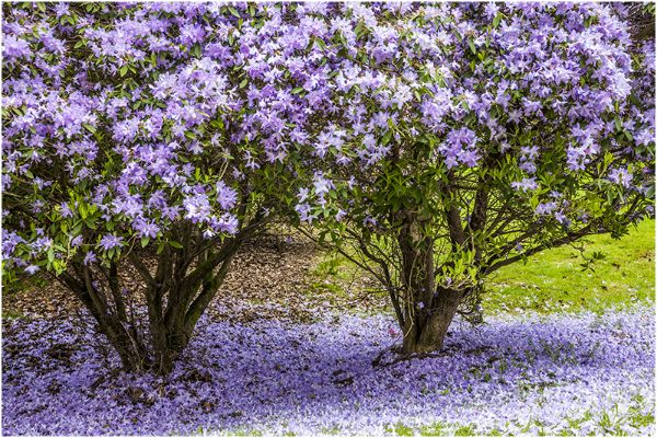 Spring 07