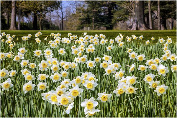 Spring 10