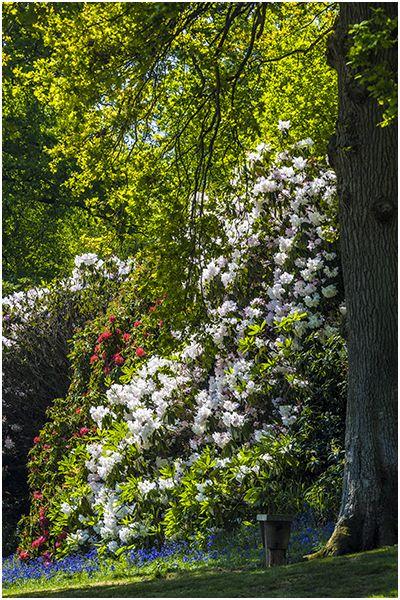 Spring 65