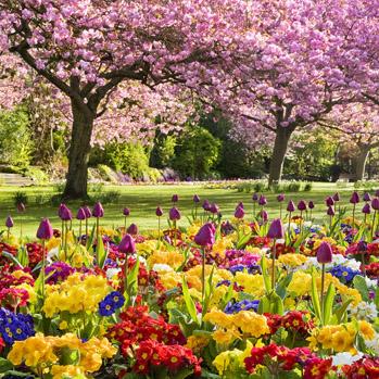 WG_13 Springtime in the Park