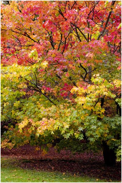 Westonbirt Trees 17