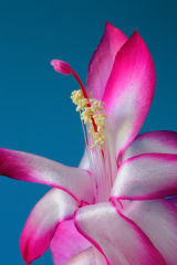 easter cactus 1