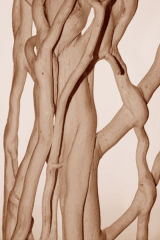 stripped ivy