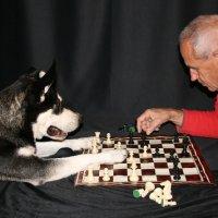 Chess Mates (P3)