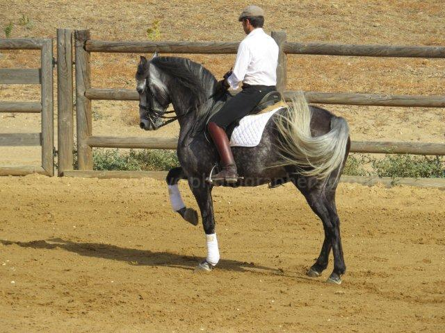 Dressage at Camp Abierto