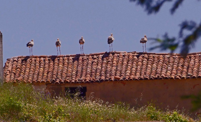 Parade of Storks (P2)