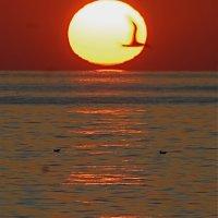 Sunset in Villamoura with Gull