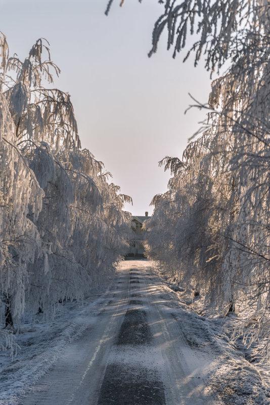 Frozen Alle