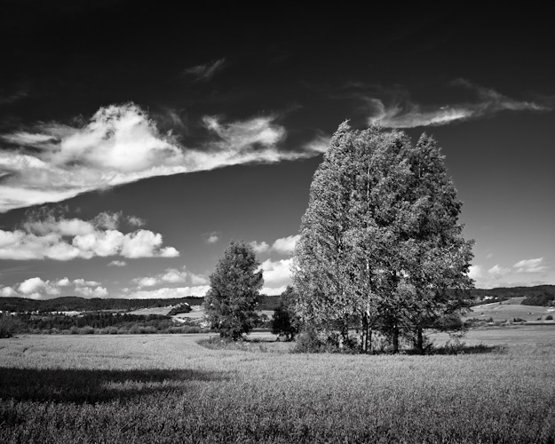Field at Øyeren