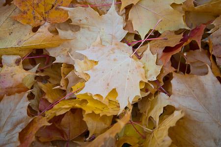 5. Autumn Leaves