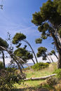Landscape on Saint-Honorat