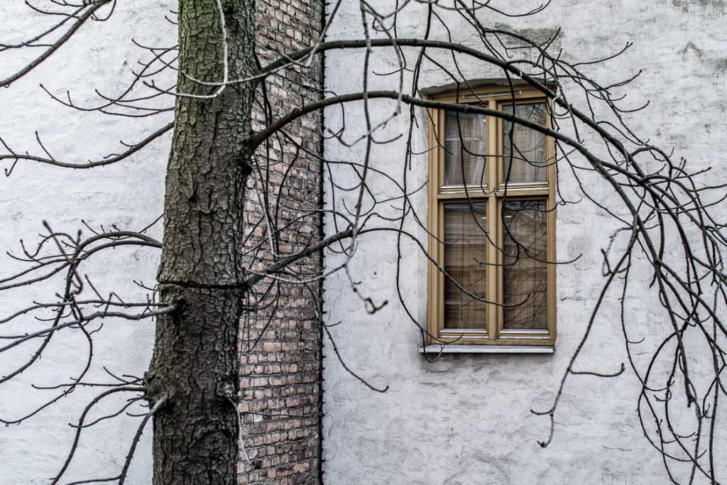 Window with Tree