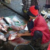 Fishmarket Sittwe, Burma