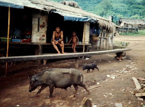 Hill village, Northern Thailand