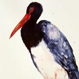 Blue Necked Stork