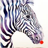 Blue Simmer Zebra
