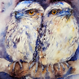 Frogmouth Duo