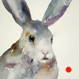 Gina the Grey Rabbit