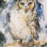 Night Watch_Owl