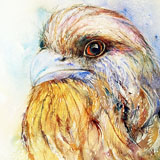 Tawney Frogmouth