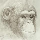 Chimp G