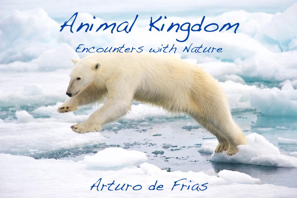 Book Cover - Animal Kingdom
