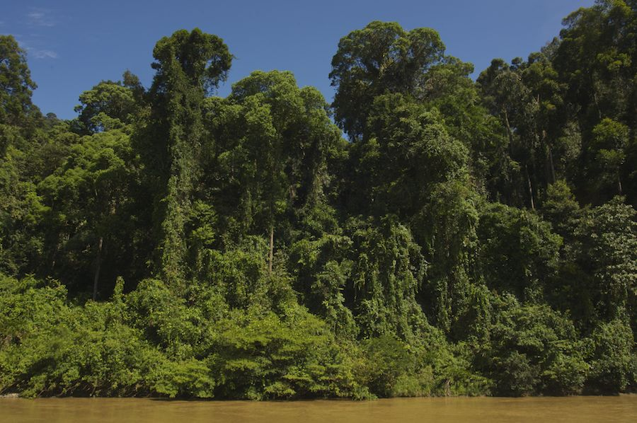 Rainforest, Borneo