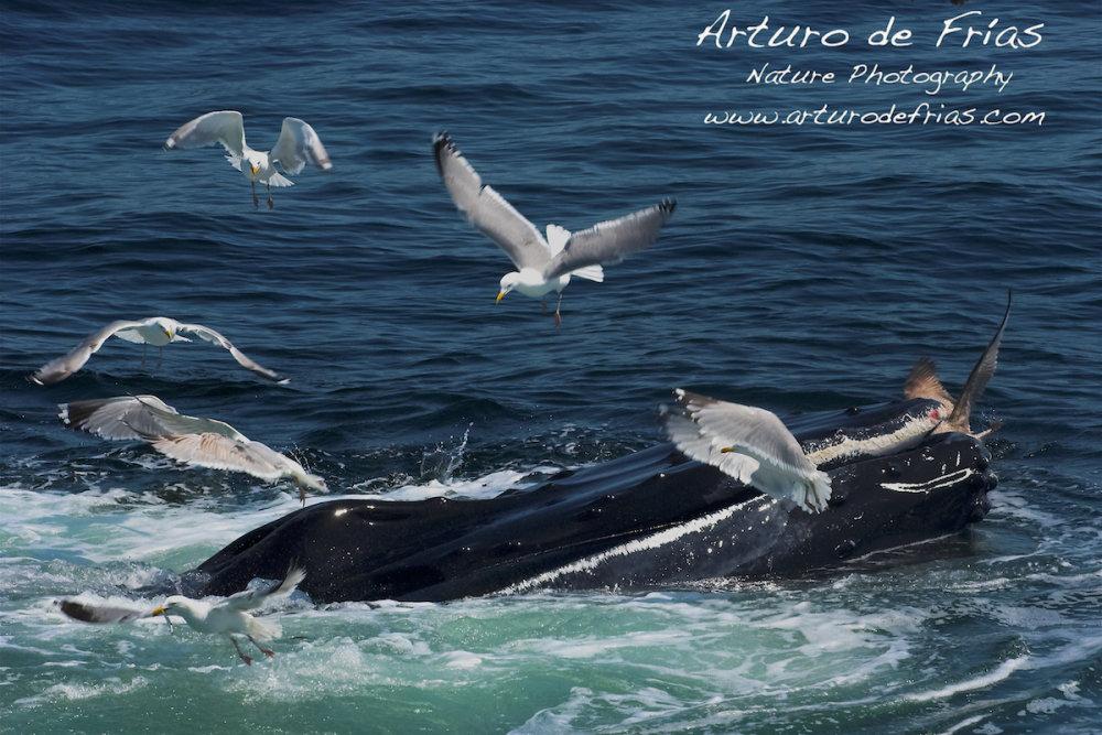 Whale vs. gull