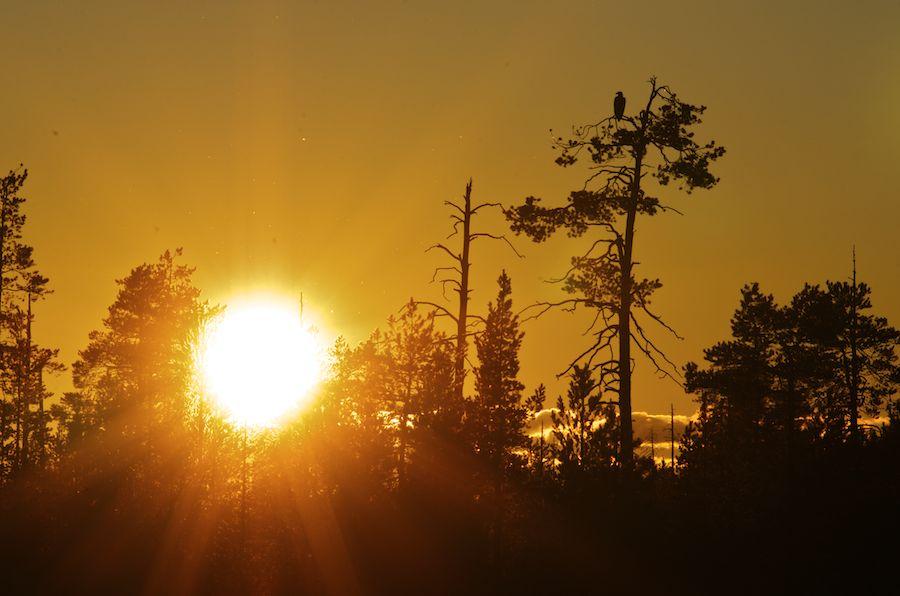 Taiga near Kuhmo, Finland