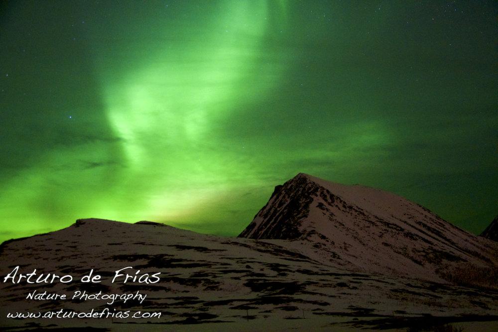 Aurora in the fjord 1