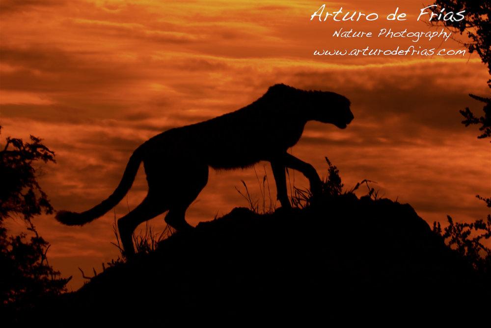 Hunter at dusk