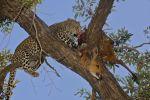 Leopard Larder