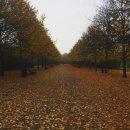 Regents Park, London.